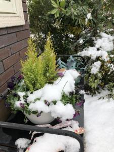 雪をかぶったプランターです