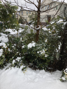 我が家の庭の雪景色